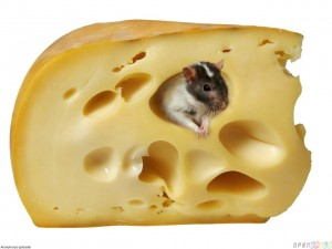 mouse_in_a_piece_of_cheese_1280x960